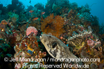 Blue-spotted puffer on Coral Reef photos