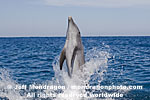 Bottlenose Dolphin pictures