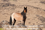 Wild Horse Mare pictures