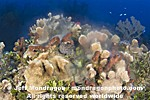 Coral and Sponges Spawning images