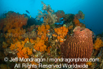 barrel sponge on Tropical Coral Reef pictures