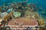 Tropical Coral Reef pictures