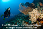 Scuba diver over tropical coral reef images